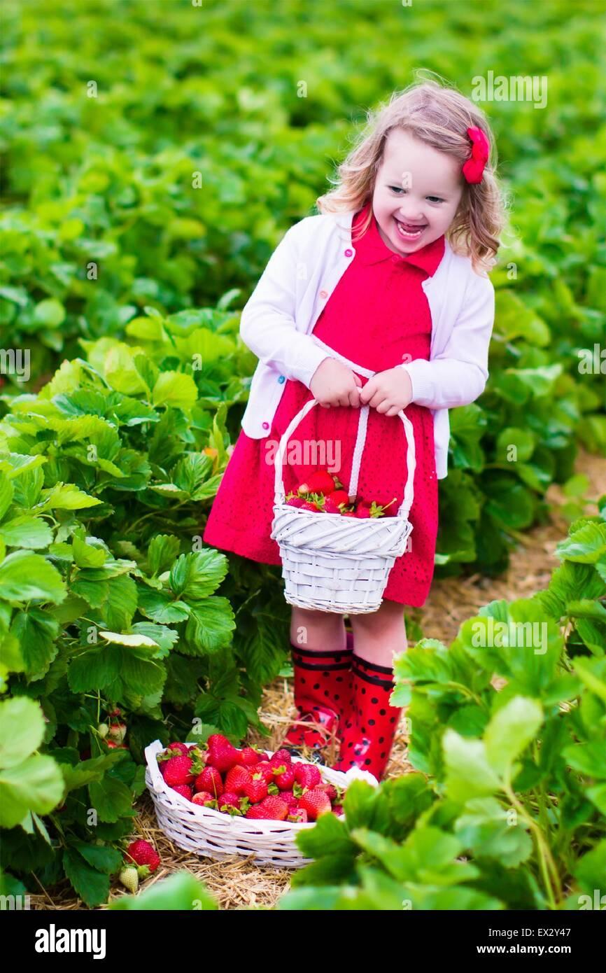 Niño recogiendo fresas. Los niños adquieren frutas frescas orgánicas en la granja de la fresa. Los Imagen De Stock