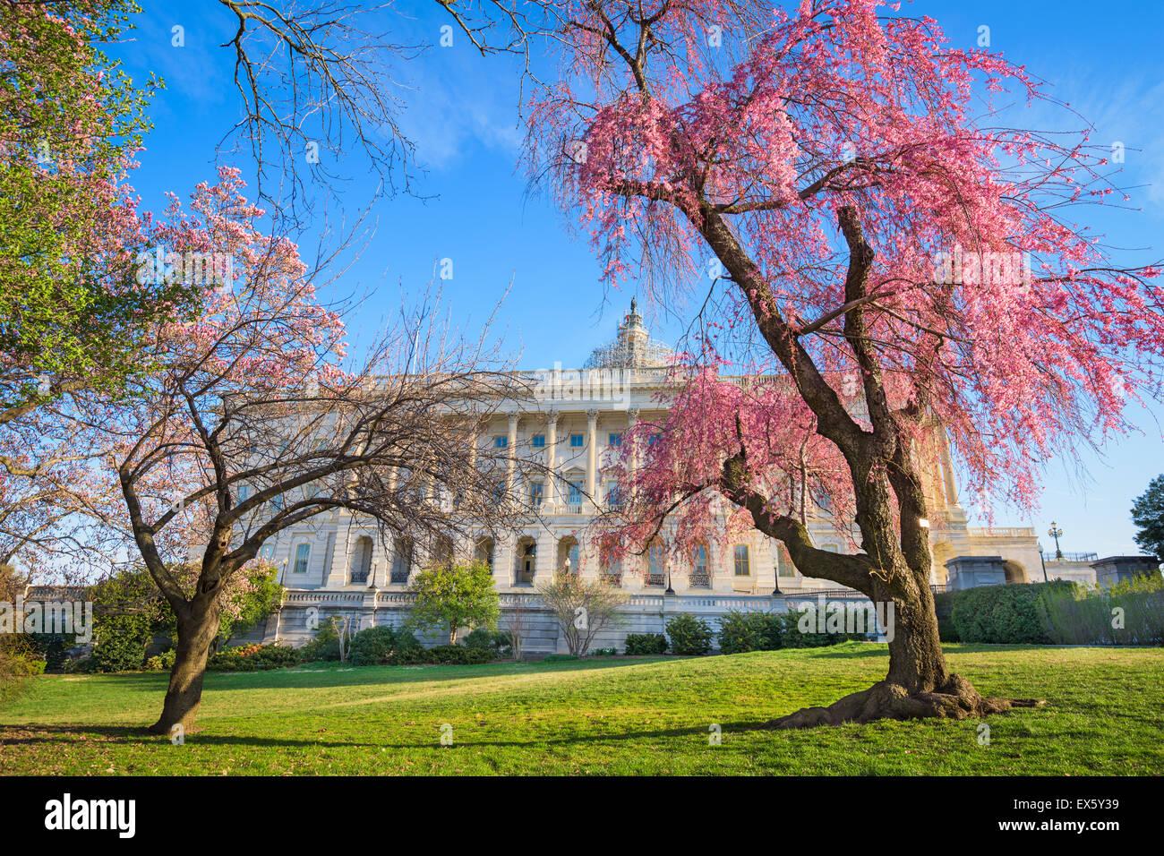 Washington DC en el Edificio del Capitolio durante la temporada de primavera. Foto de stock