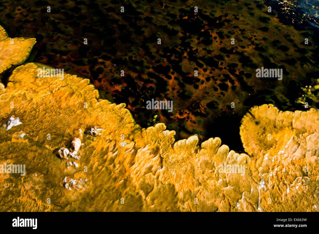 Las algas y los microorganismos termófilos en Hot Springs, en la Cuenca del Géiser Superior, en el Parque Nacional Foto de stock