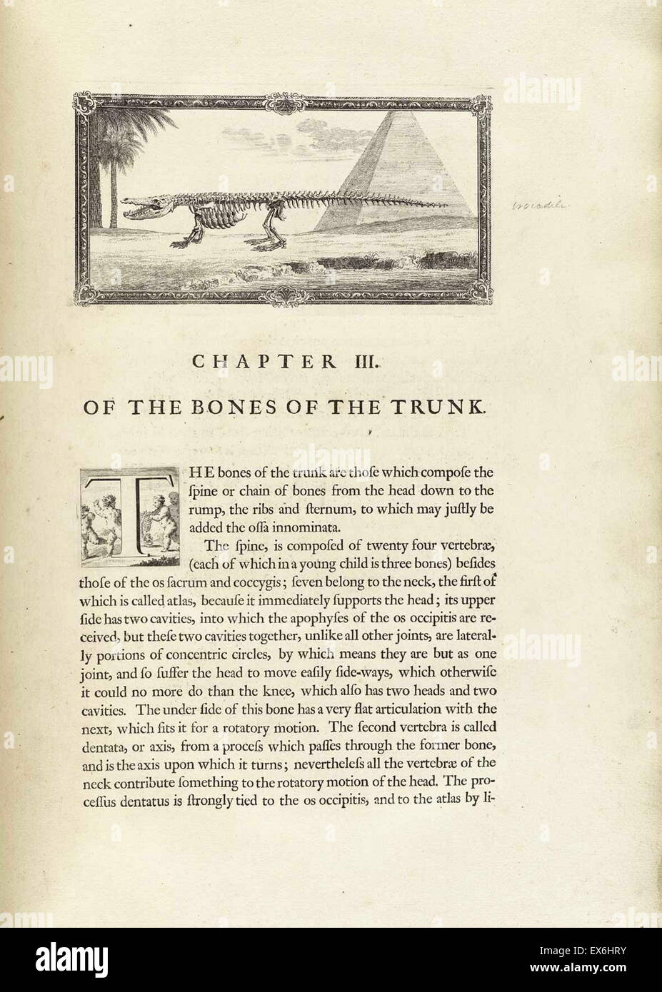 Dibujo anatómico de un cocodrilo por William Cheselden en ...