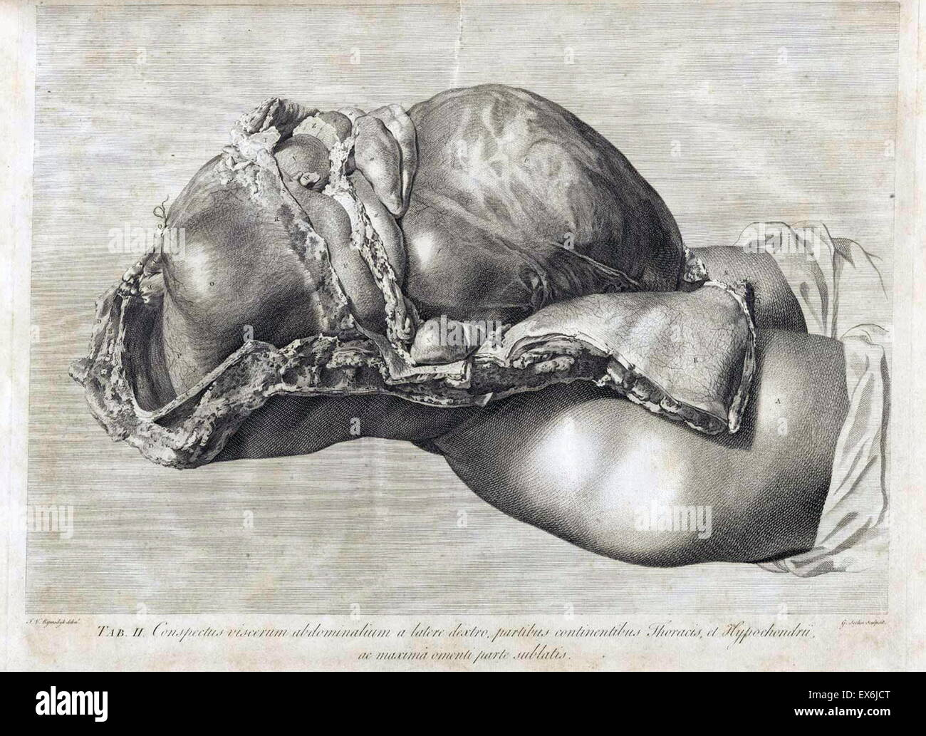 Increíble Viejas Ilustraciones De Anatomía Bandera - Imágenes de ...