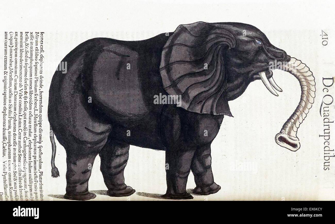 Ilustración de un elefante, de \'Medici Tigurini Historia animalium ...
