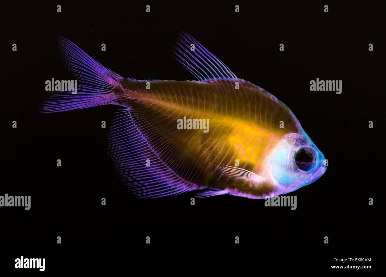 Anatomía del esqueleto de pescado Foto & Imagen De Stock: 84998444 ...