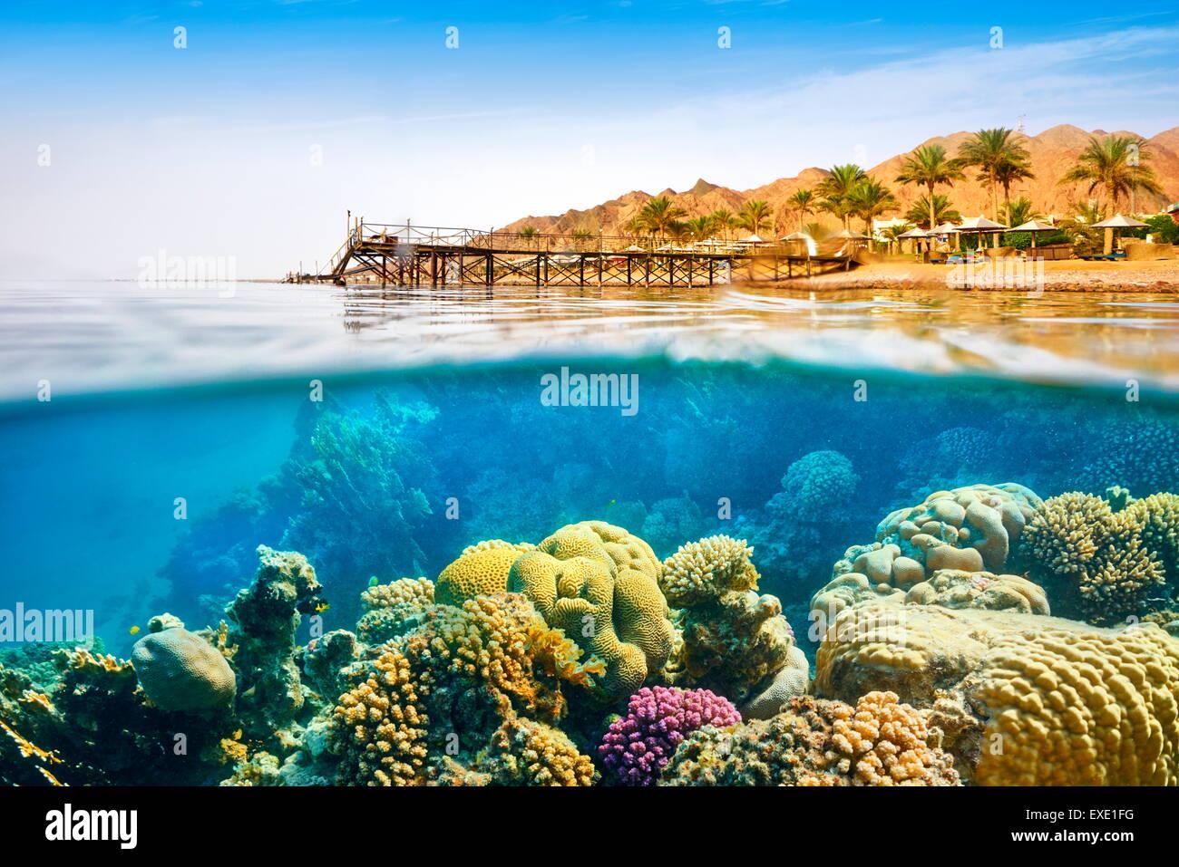Vistas submarinas, arrecifes de coral, Dahab, Mar Rojo, Egipto Imagen De Stock