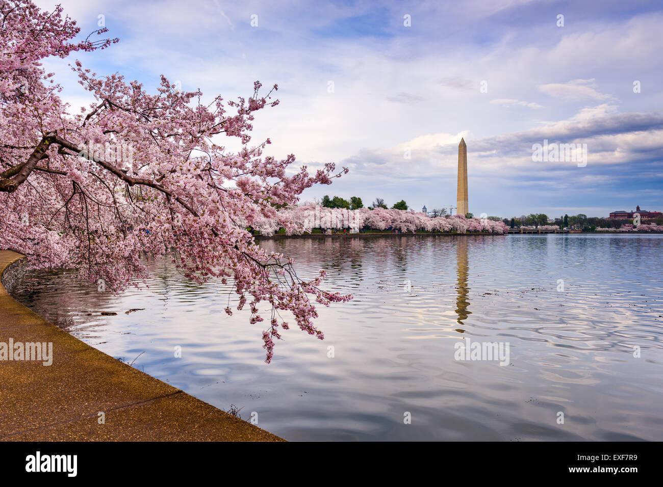Washington, DC, Estados Unidos de América en la Cuenca Tidal, con el Monumento a Washington en primavera. Imagen De Stock