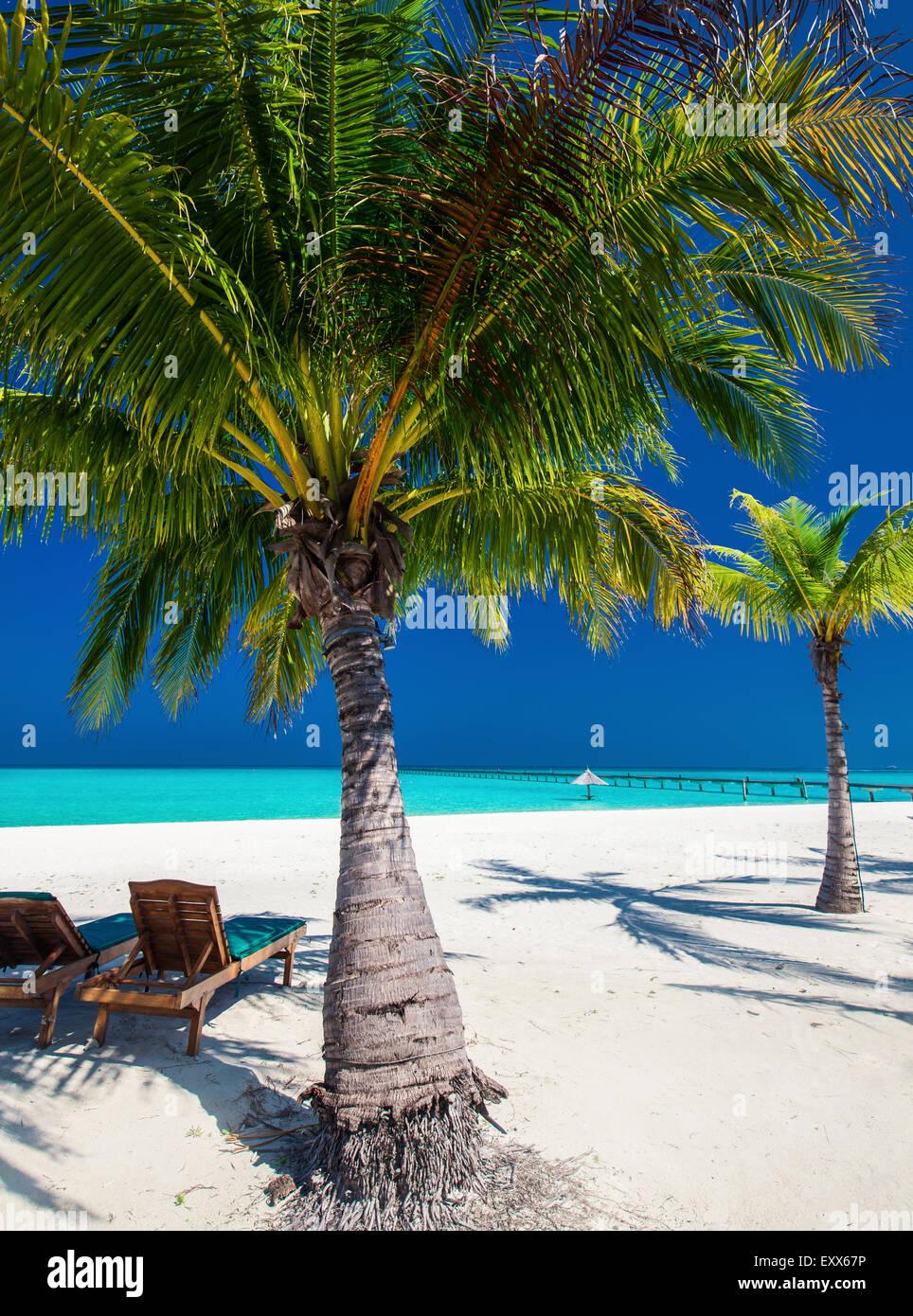 Sillas de cubierta bajo umrellas y palmeras en una playa tropical Imagen De Stock