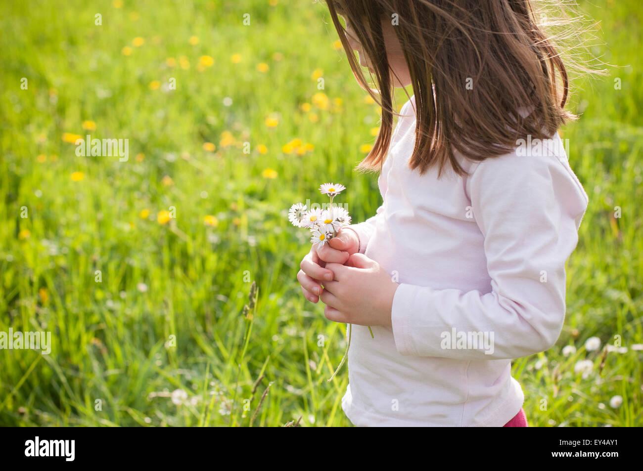 Joven en el campo mirando las margaritas en sus manos Foto de stock