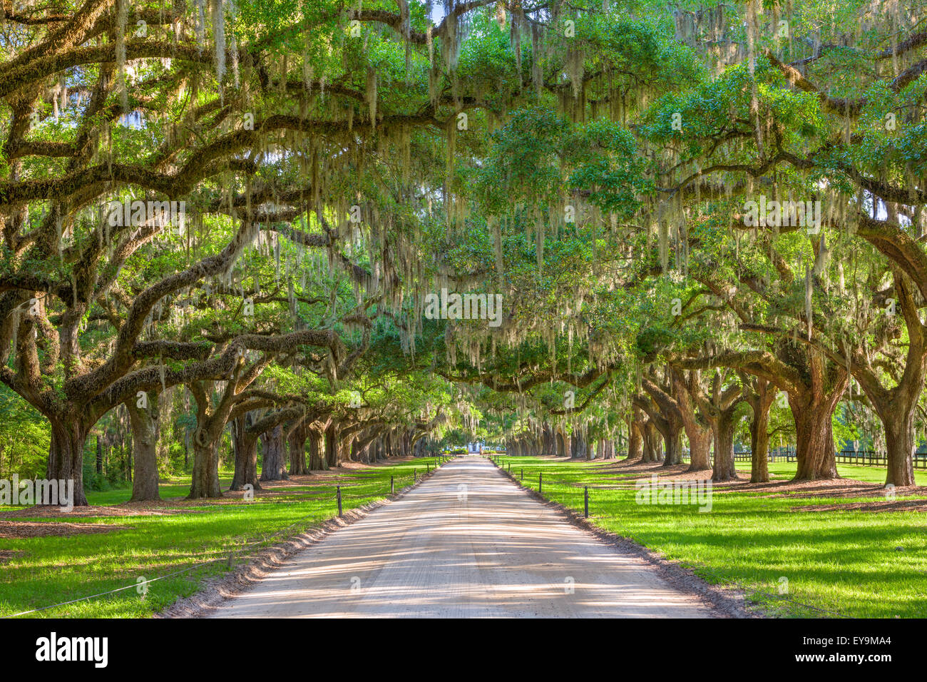 Charleston, Carolina del Sur, EE.UU. plantación de árboles de entrada. Foto de stock