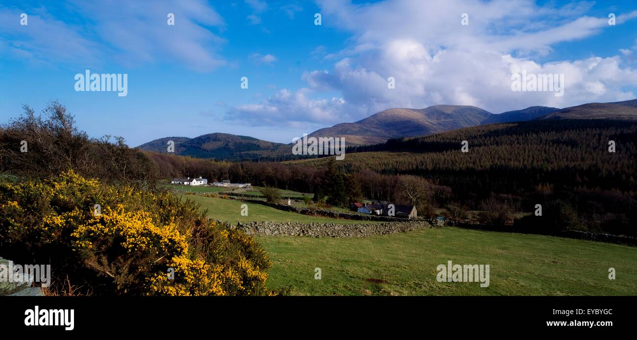 Farm, cerca de la montaña Tullymore Bosque, Montañas de Mourne, Co Down, Irlanda Foto de stock