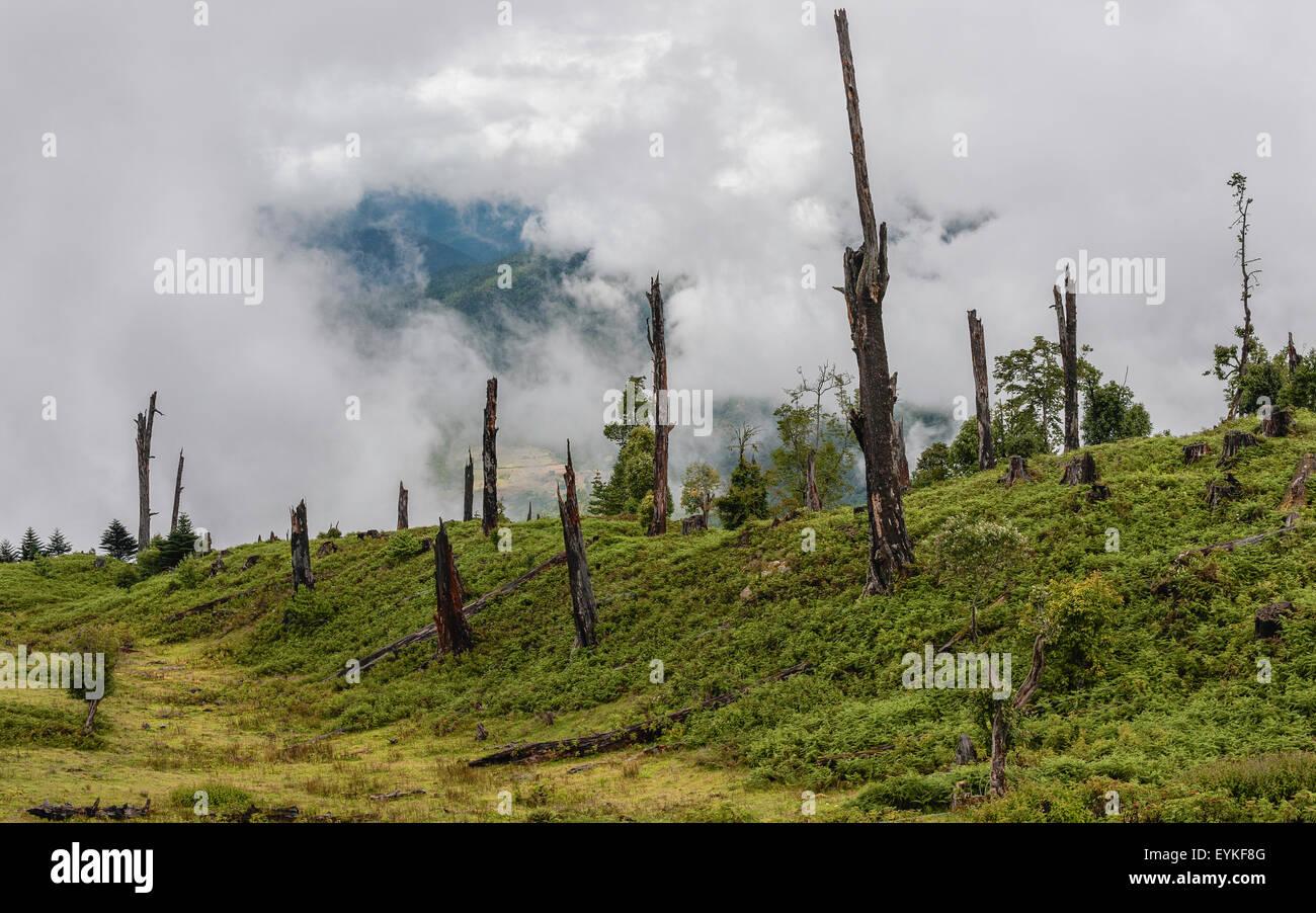 Las enfermedades y la deforestación a lo largo de las laderas de las montañas cerca de Dirang, Arunachal Imagen De Stock