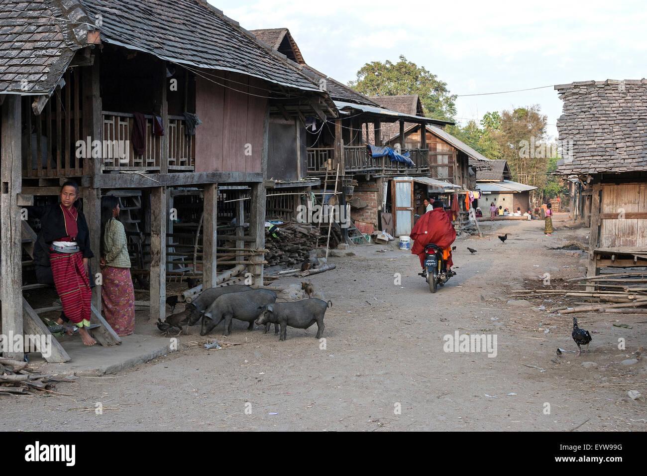 Aldea Palaung, con seres humanos y cerdos, cerca de Kyaing Tong, el Estado de Shan Golden Triangle, Myanmar Imagen De Stock