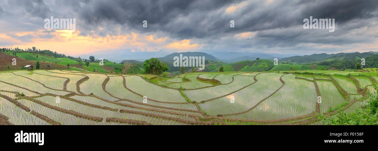 Campo de arroz en terrazas verdes Pa Pong Pieng ,Chiang Mai, Tailandia Imagen De Stock