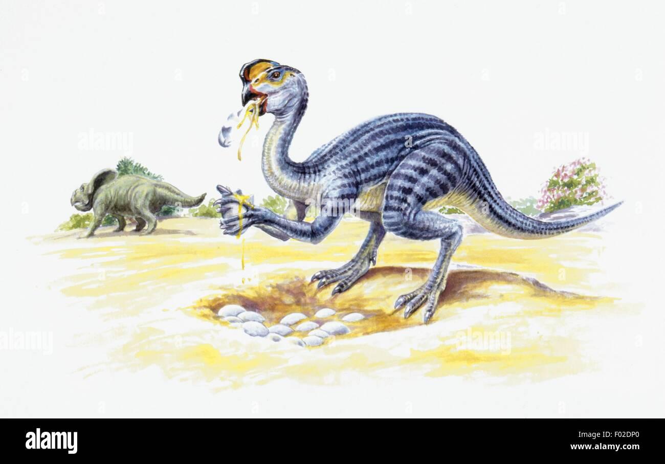 Paleozoologia Periodo Cretacico Dinosaurios Oviraptor En Primer Plano Y Protoceratops Obras De Arte Robin Bouttell Fotografia De Stock Alamy Oviraptor (meaning egg seizer or egg thief) is a genus of oviraptorid dinosaur that lived in asia during the late cretaceous period. https www alamy es foto paleozoologia periodo cretacico dinosaurios oviraptor en primer plano y protoceratops obras de arte robin bouttell 86106552 html