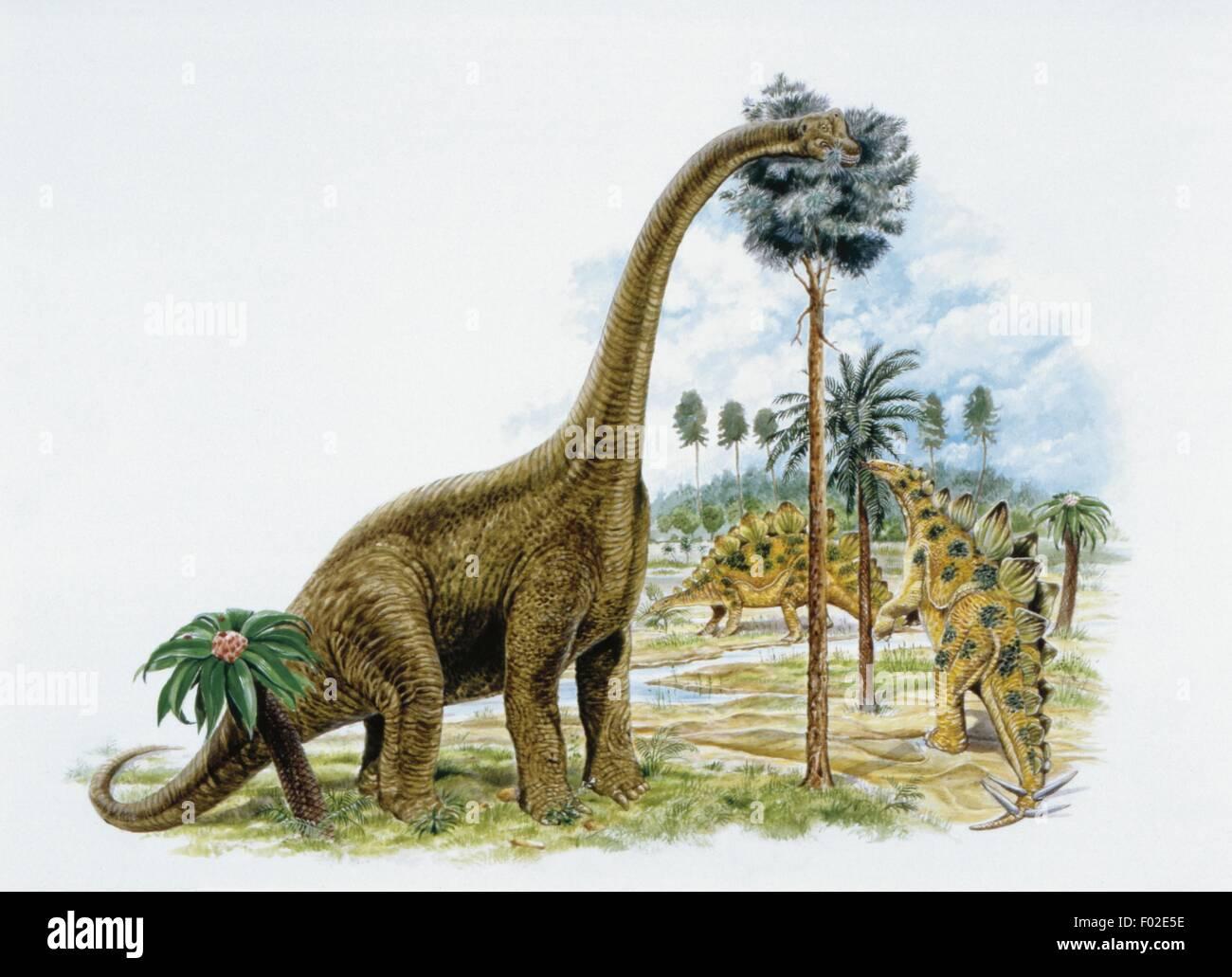 Paleozoología - período Jurásico - Dinosaurios - Obras de Arte Imagen De Stock