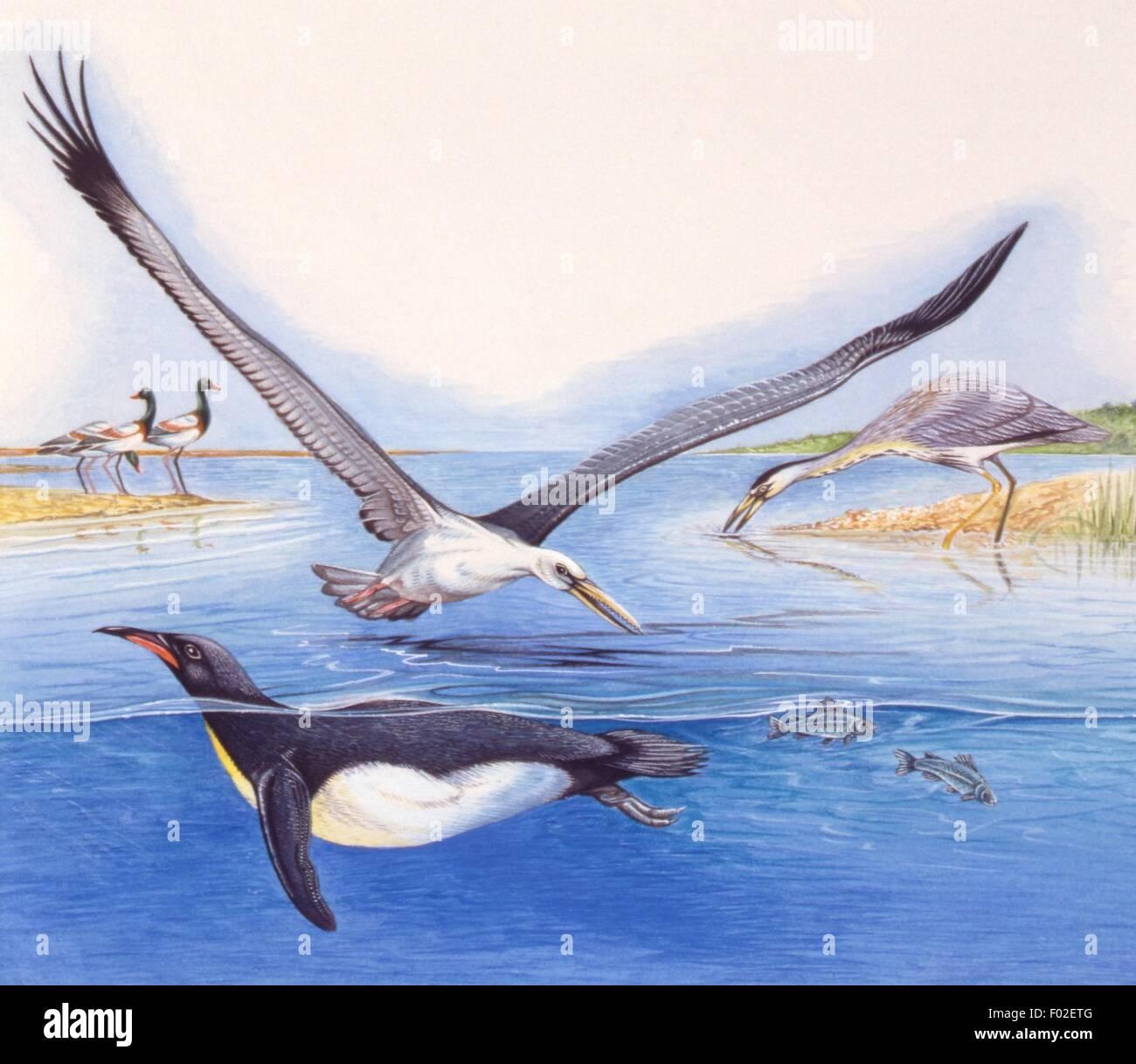Paleozoología - Aves - trabajo de arte prehistórico Foto de stock