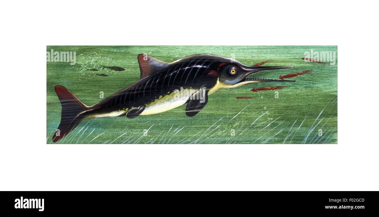 Jurassic Ichthyosaurus, ilustración Imagen De Stock