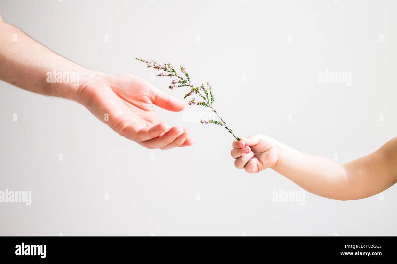 Niño de entregar la flor para un adulto Imagen De Stock