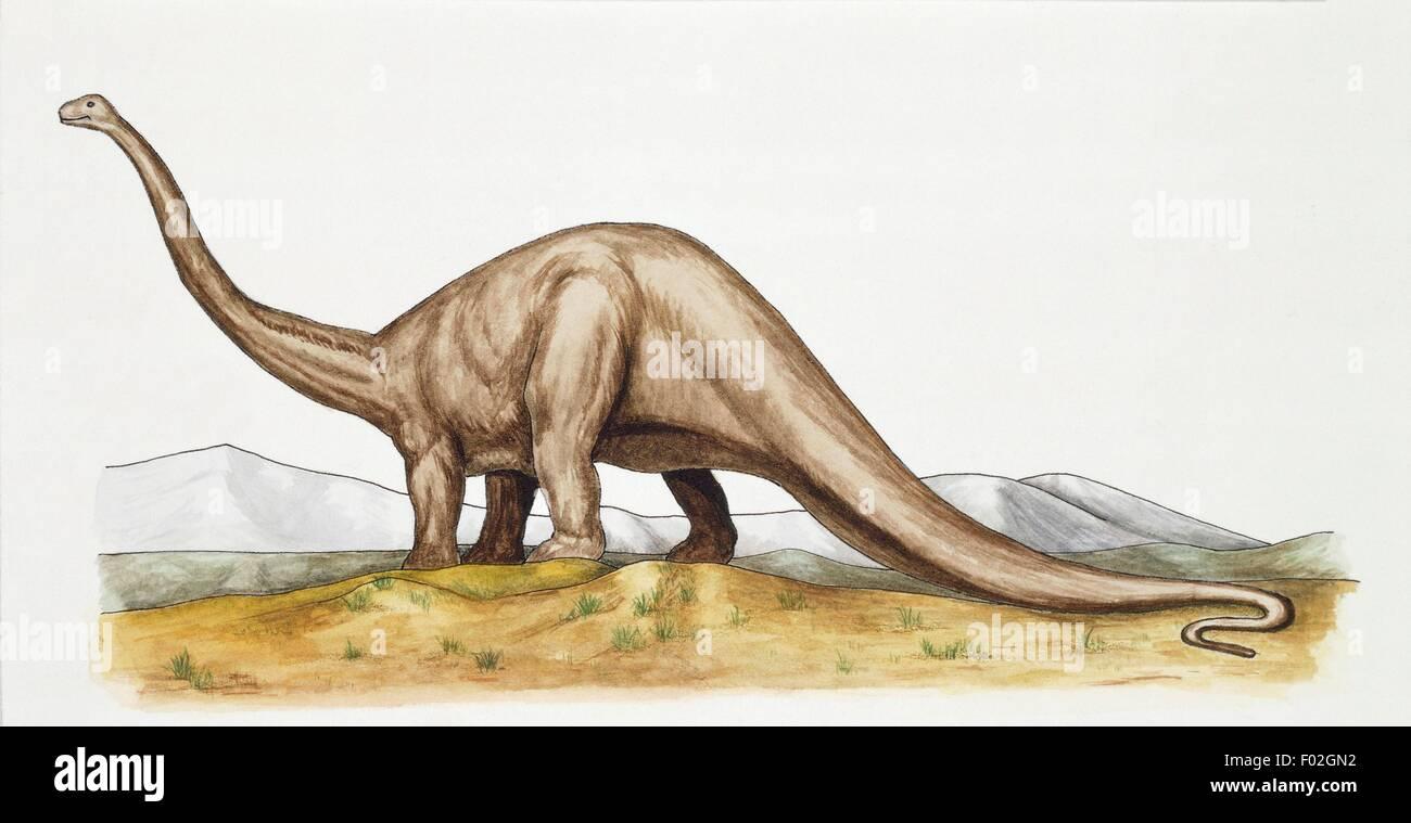 Prehistoria - período Jurásico - Dinosaurios - Diplodocus - Ilustración. Imagen De Stock