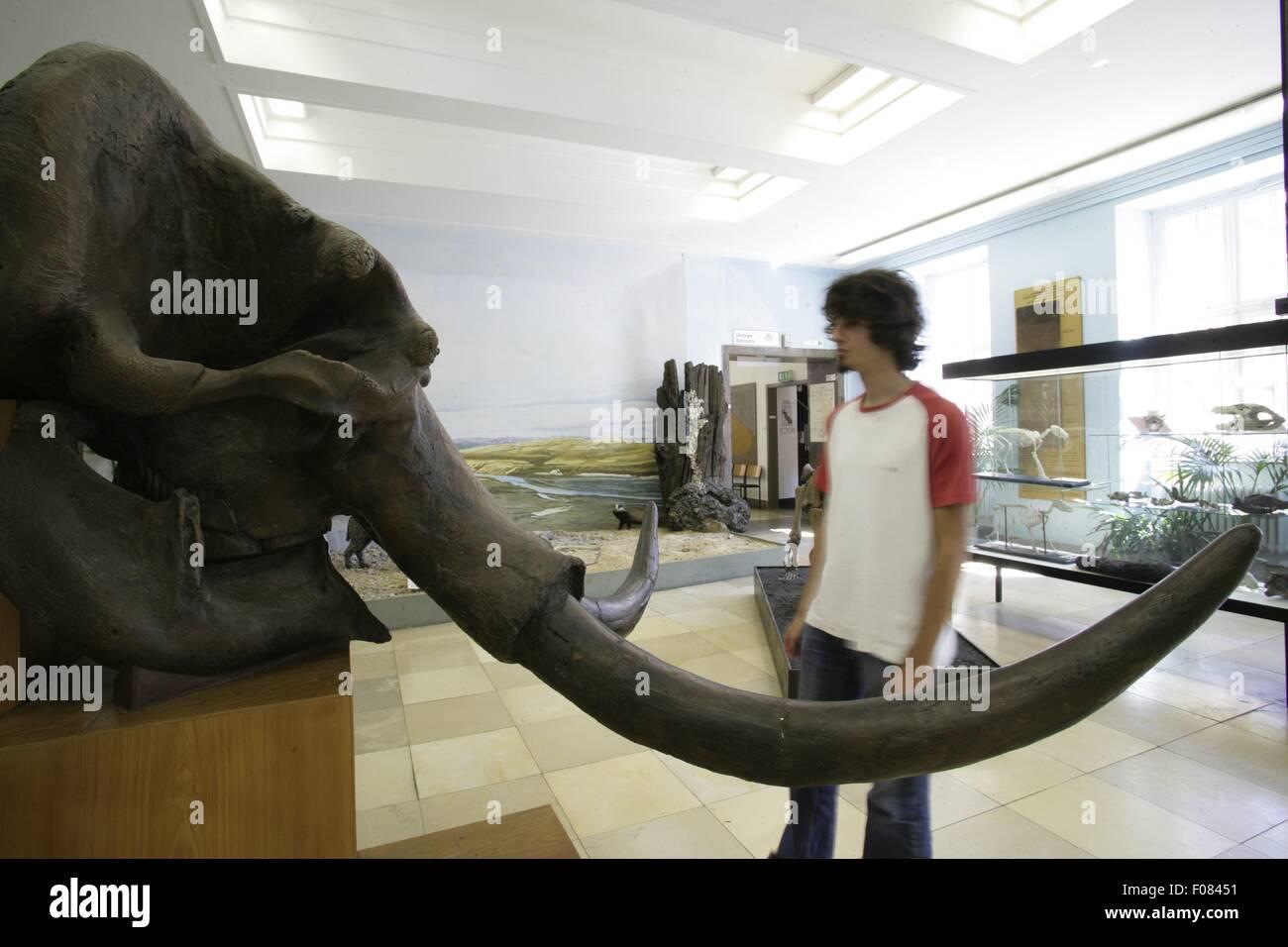 Hombre en Geological-Paleontological Museum, Hamburgo, Alemania. Imagen De Stock