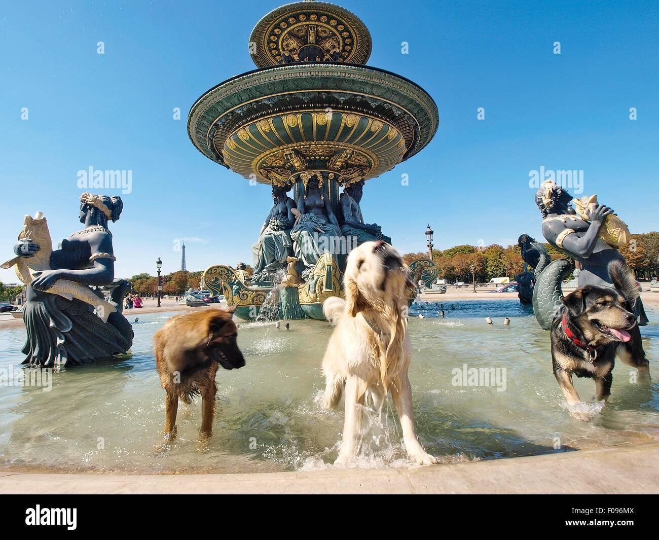 Perros en la Fontaine des Mers en la Place de la Concorde, París, Francia Imagen De Stock