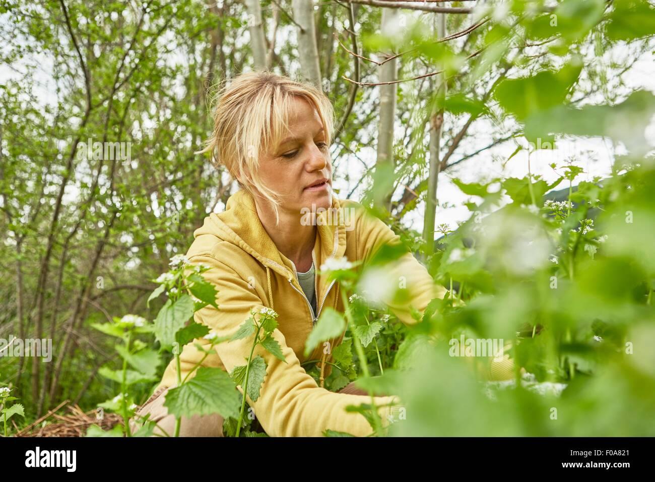 Mujer madura, jardinería, tirando hacia arriba la maleza Imagen De Stock
