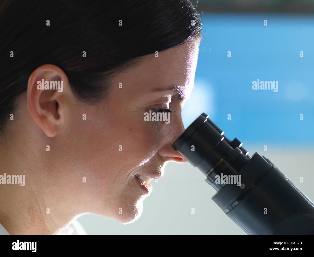 Scientist ver culturas bajo microscopio invertido para la investigación médica y farmacéutica Imagen De Stock