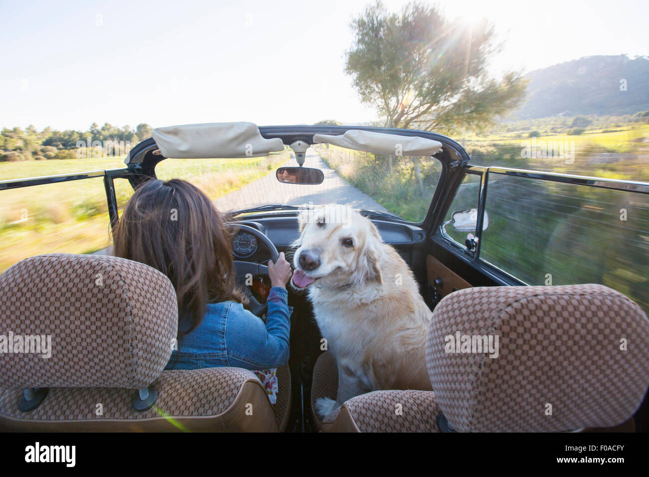 Mujer madura y perro en coche convertible, vista trasera Imagen De Stock