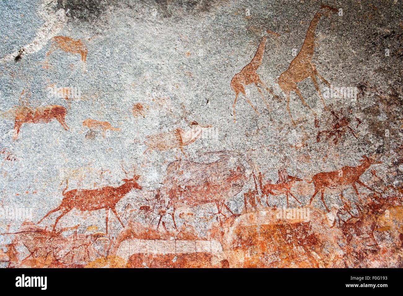 Arte rupestre con animales pintados en la pared Nswatugi Cuevas Parque Nacional de Matobo Zimbabwe Africa Imagen De Stock