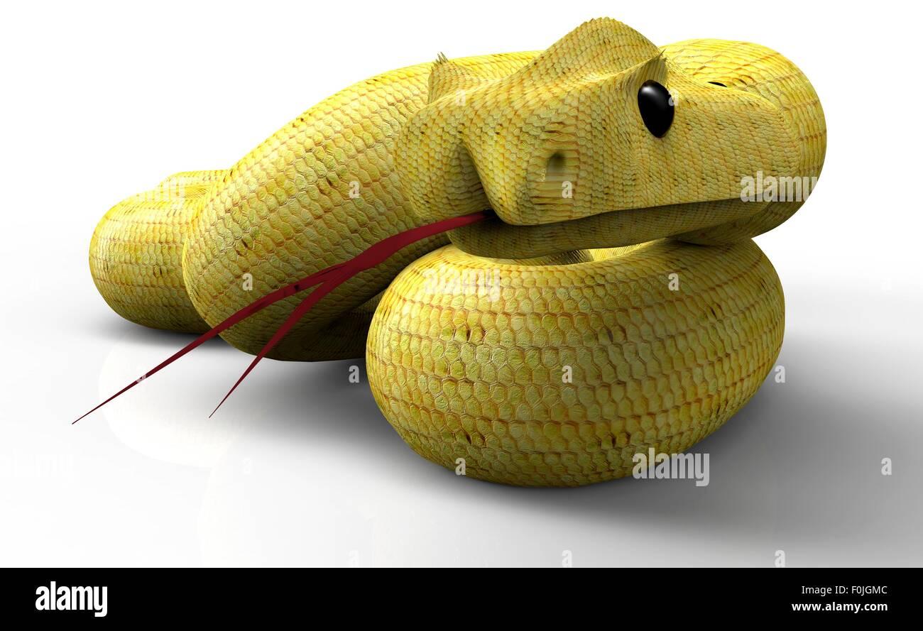 Snake aislado en blanco listo para atacar. Imagen De Stock