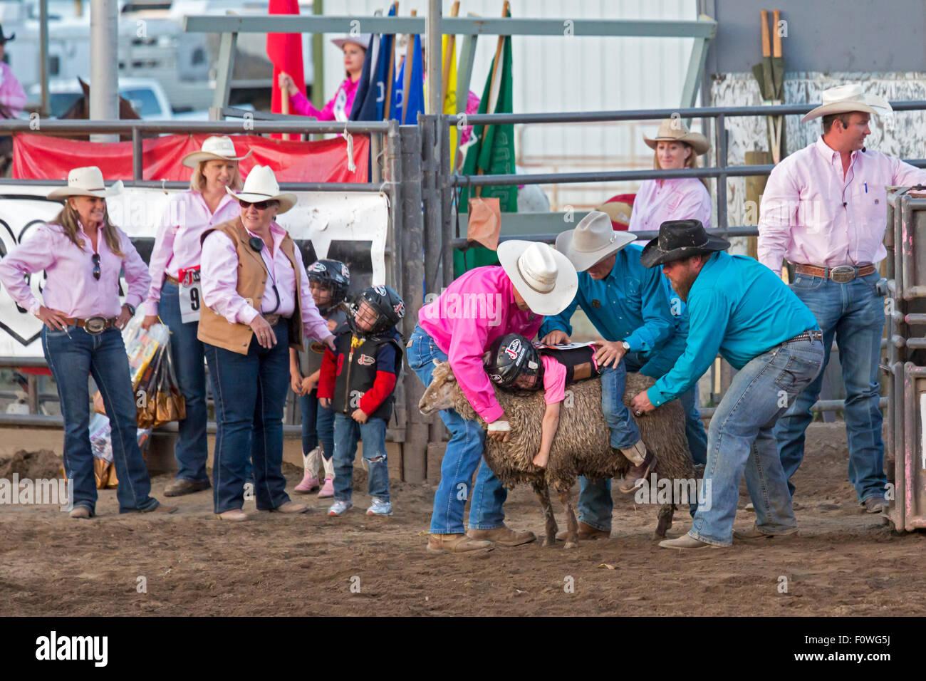 En Estes Park, Colorado - niños de edades entre 5-8 ride ovejas durante el carnero bustin' en la azotea Imagen De Stock