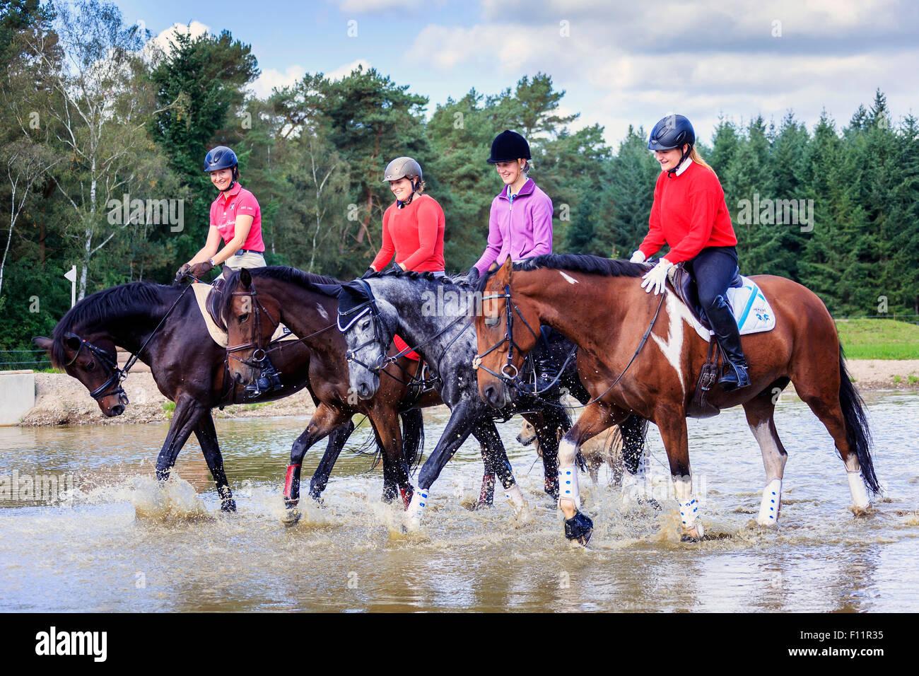 Cuatro jinetes a caballo Warmblood agua superficial Imagen De Stock