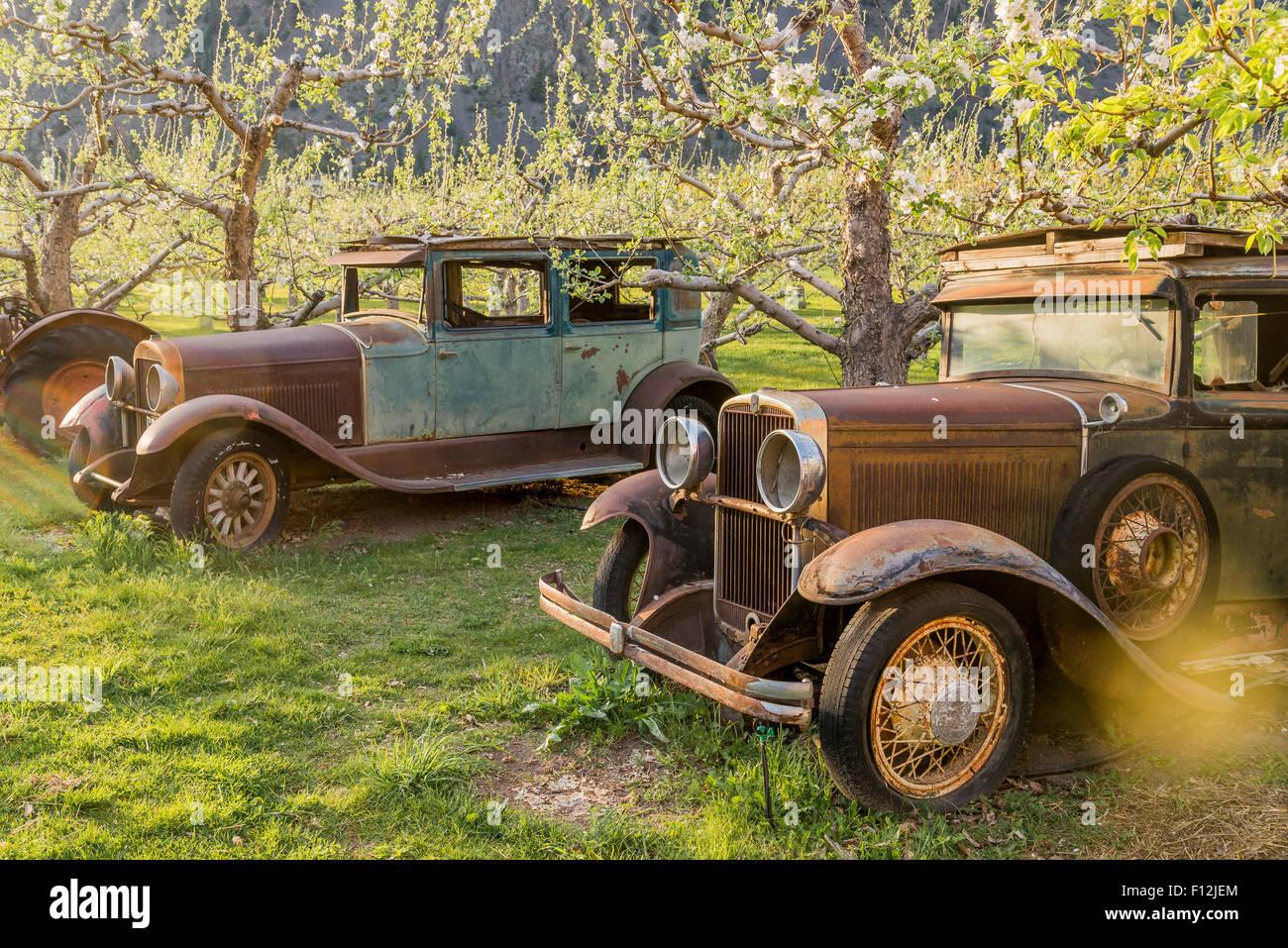 Vehículos antiguos oxidados, Parsons puesto de frutas, Keremeos, Similkameen Valley, British Columbia, Canadá Imagen De Stock