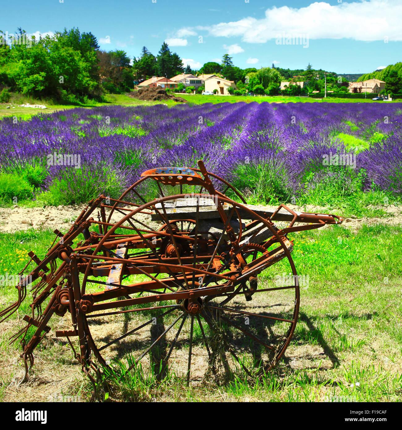 Blooming impresionante campo de lavanda,Valensole, Francia. Imagen De Stock