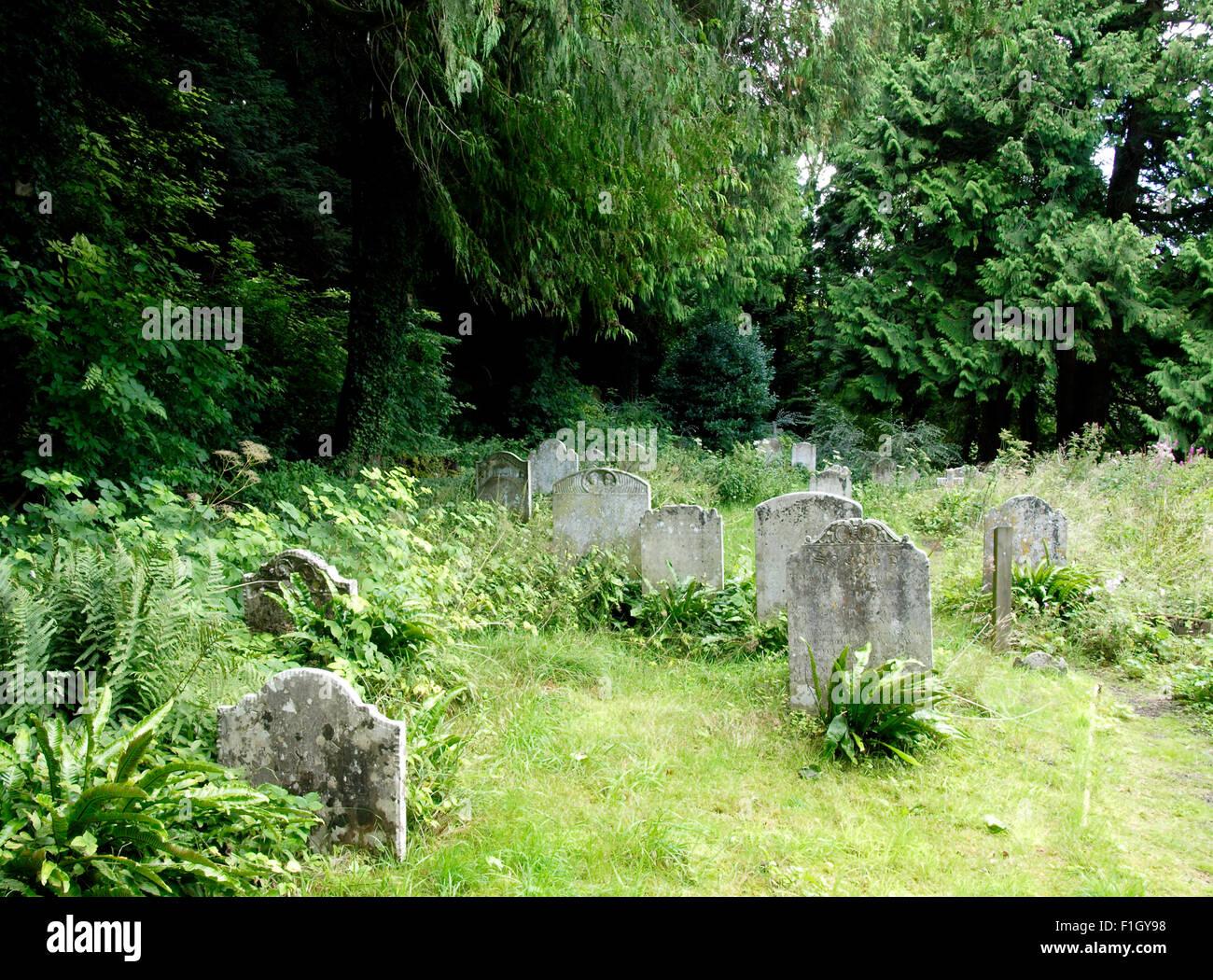 Cementerio cubierto para alentar la naturaleza, Milton Abbas, Dorset, Reino Unido Imagen De Stock