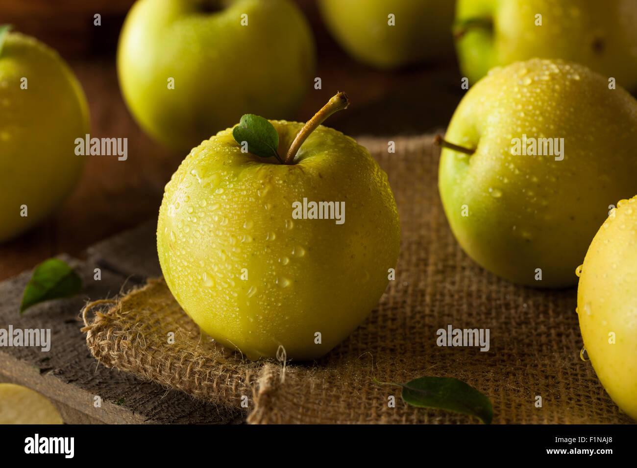 Materias orgánicas Golden Delicious listos para comer Imagen De Stock