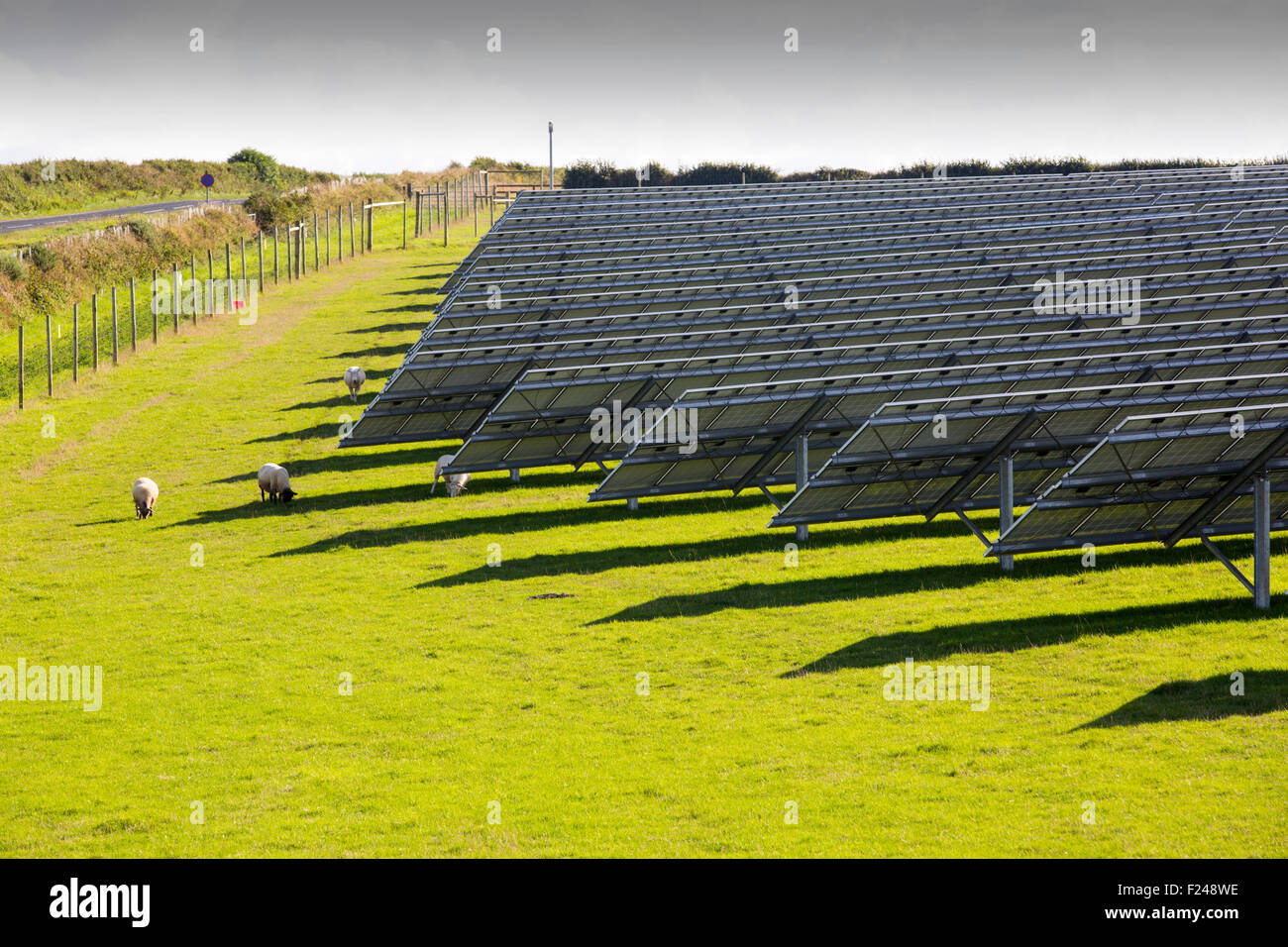 Basado en una granja cerca de la planta solar wadebridge, Cornualles, en el Reino Unido, Imagen De Stock