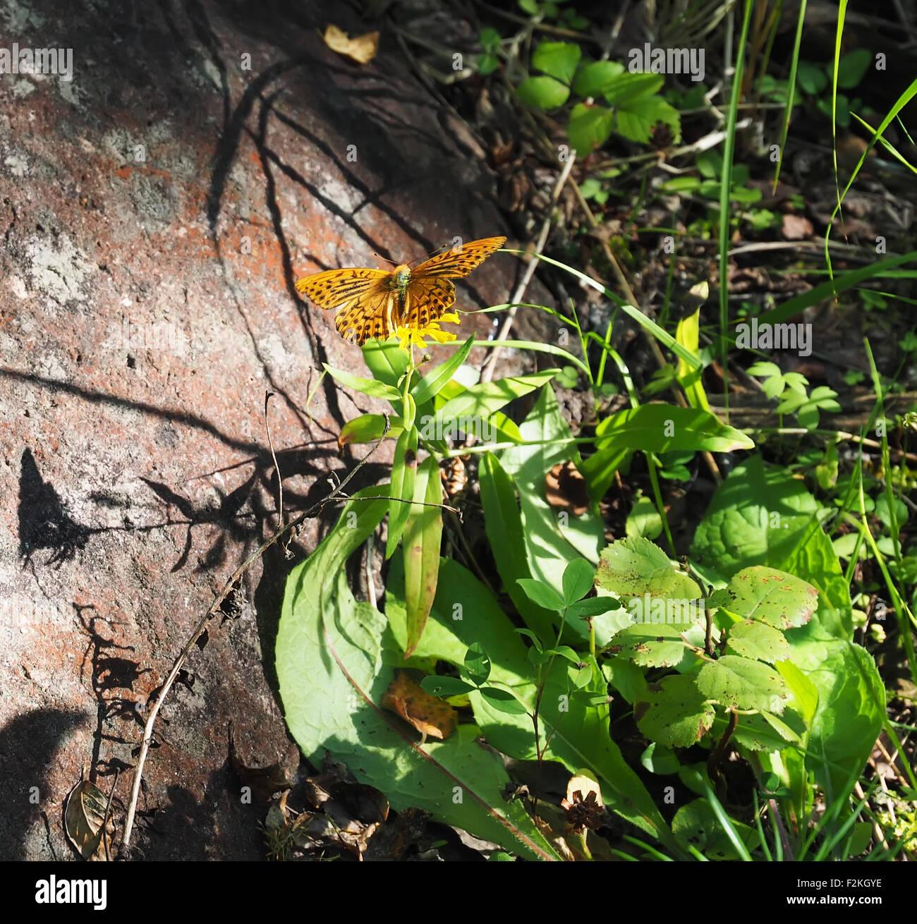 Mariposa en el bosque Foto de stock