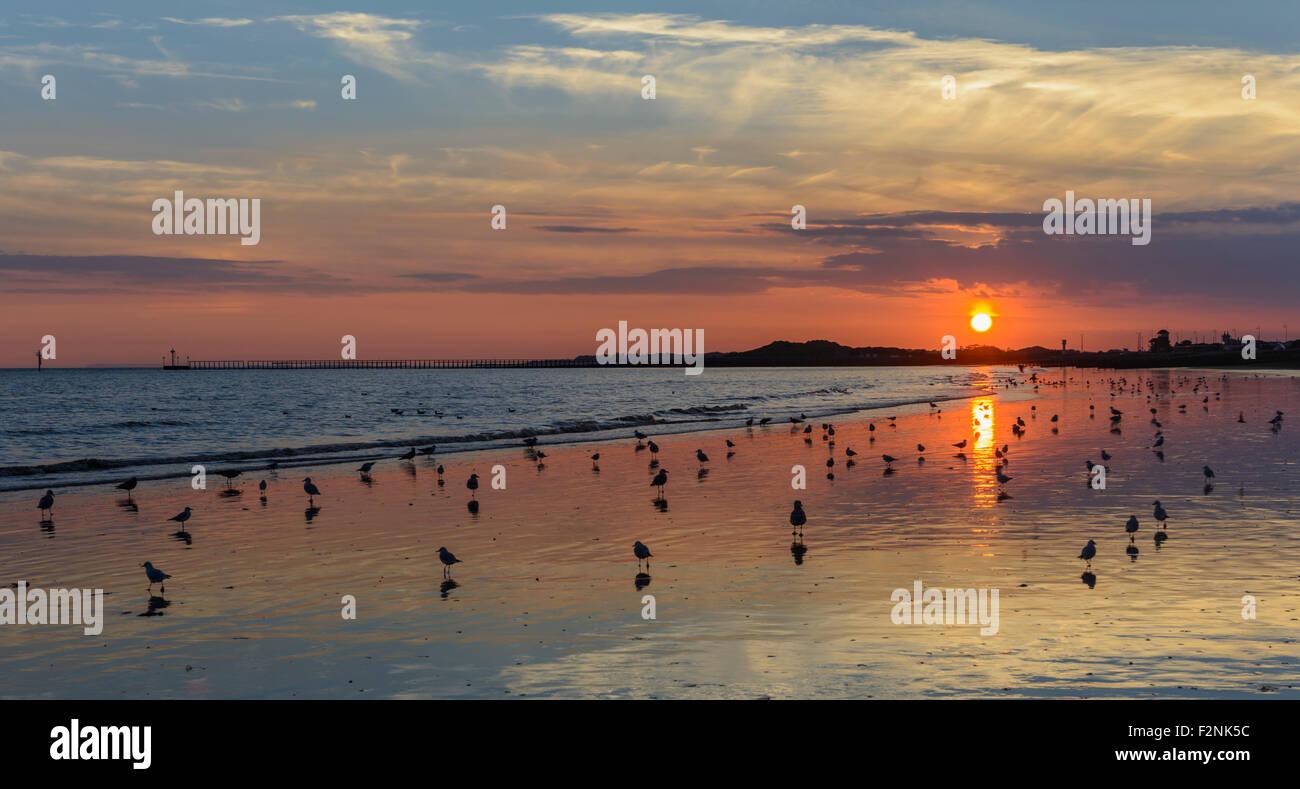 El reflejo del sol en una playa al atardecer con aves relajándose en la arena. Concepto de paz. Concepto de Imagen De Stock