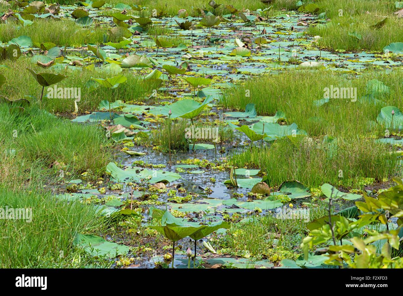 Parque Nacional Bundala, Sri Lanka Foto de stock