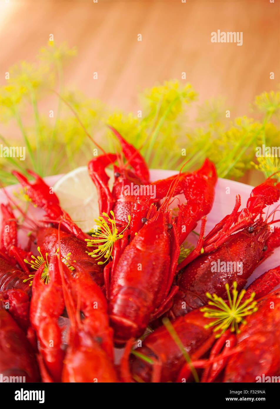 Imagen del cangrejo recién cocinados. Foto de stock