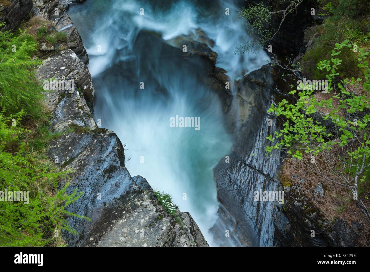 Madera en el anamones Lin de Quoich, Deeside, aberdeenshire, Escocia Imagen De Stock
