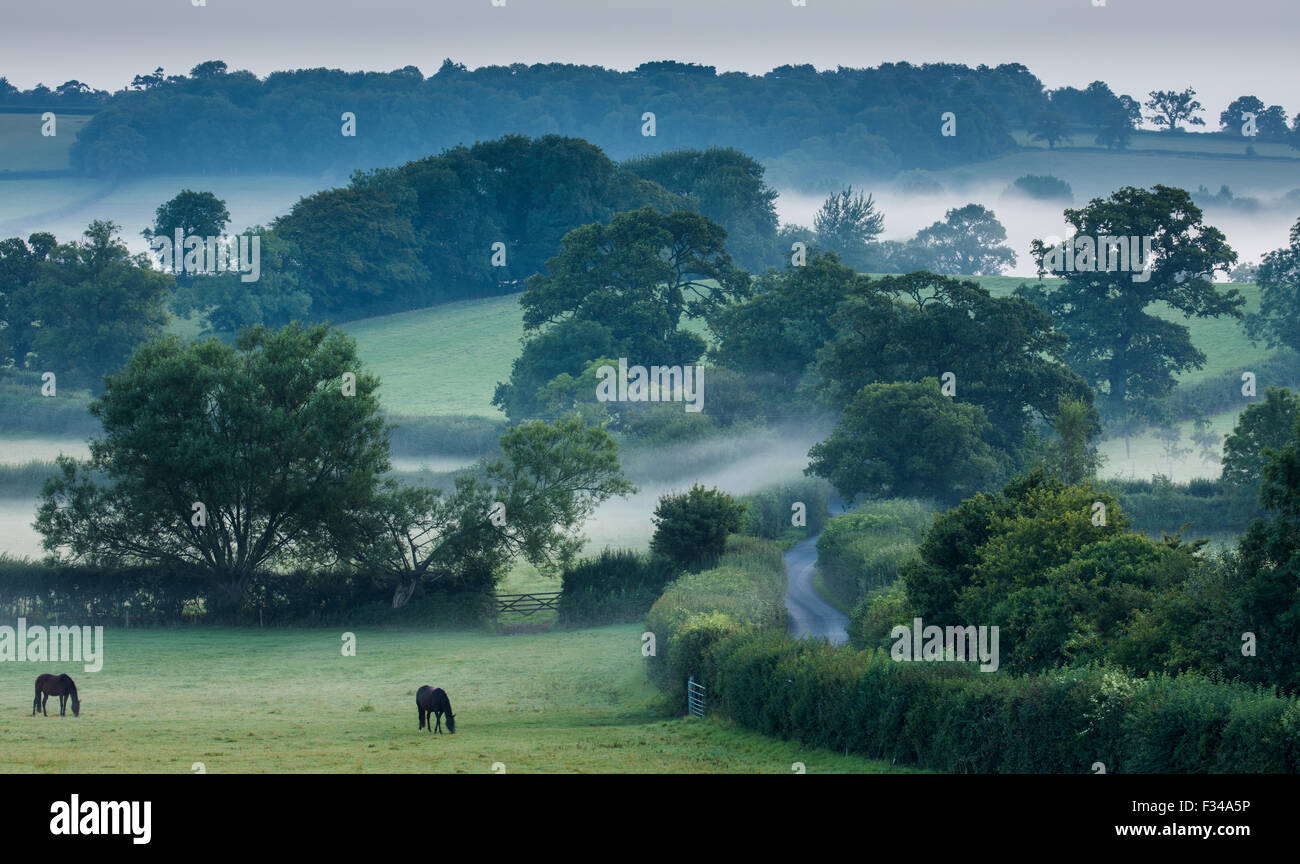 Una mañana brumosa cerca Milborne Wick, Somerset, Inglaterra, Reino Unido. Imagen De Stock