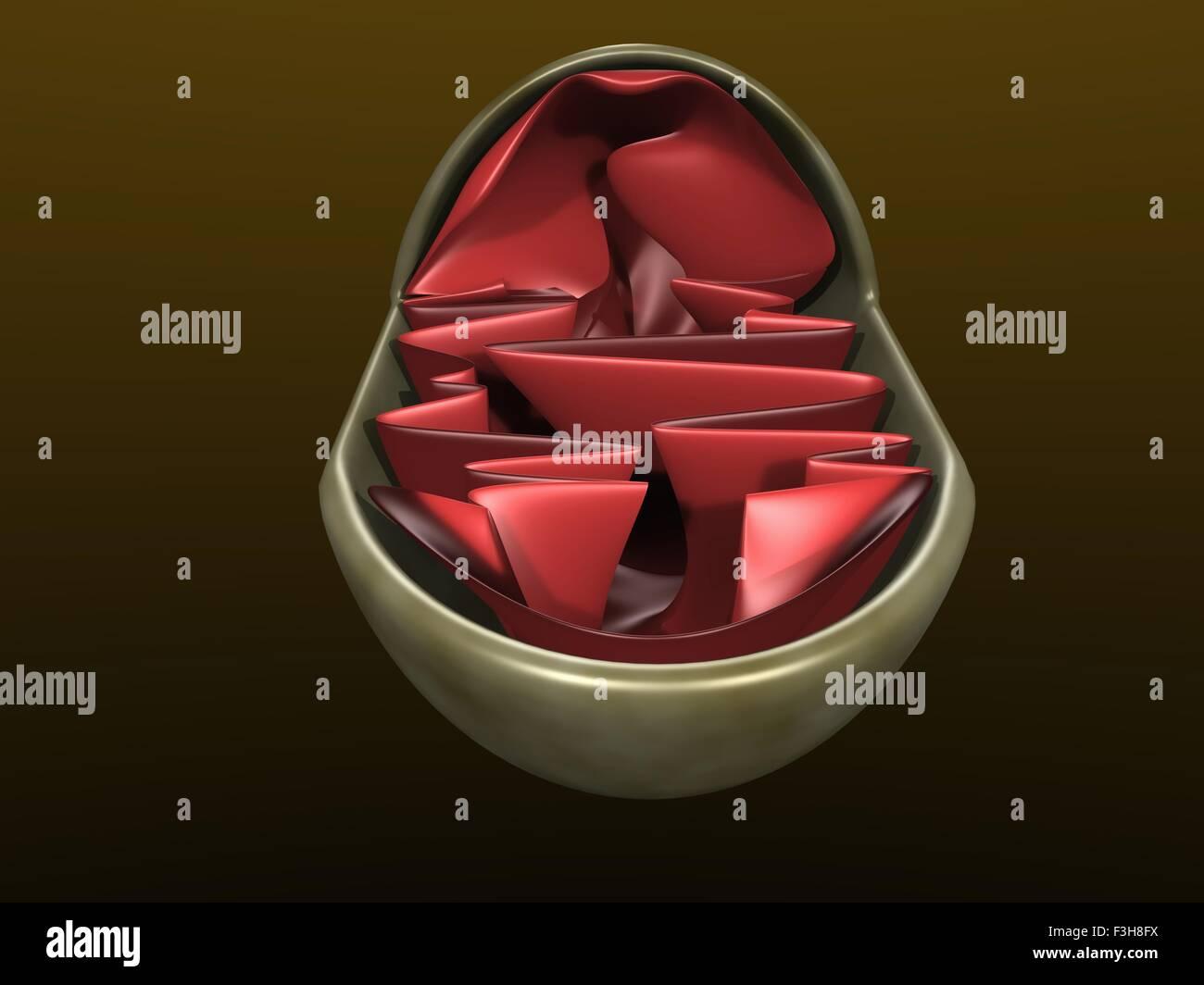 Ilustración 3d de un mitochondrium Imagen De Stock