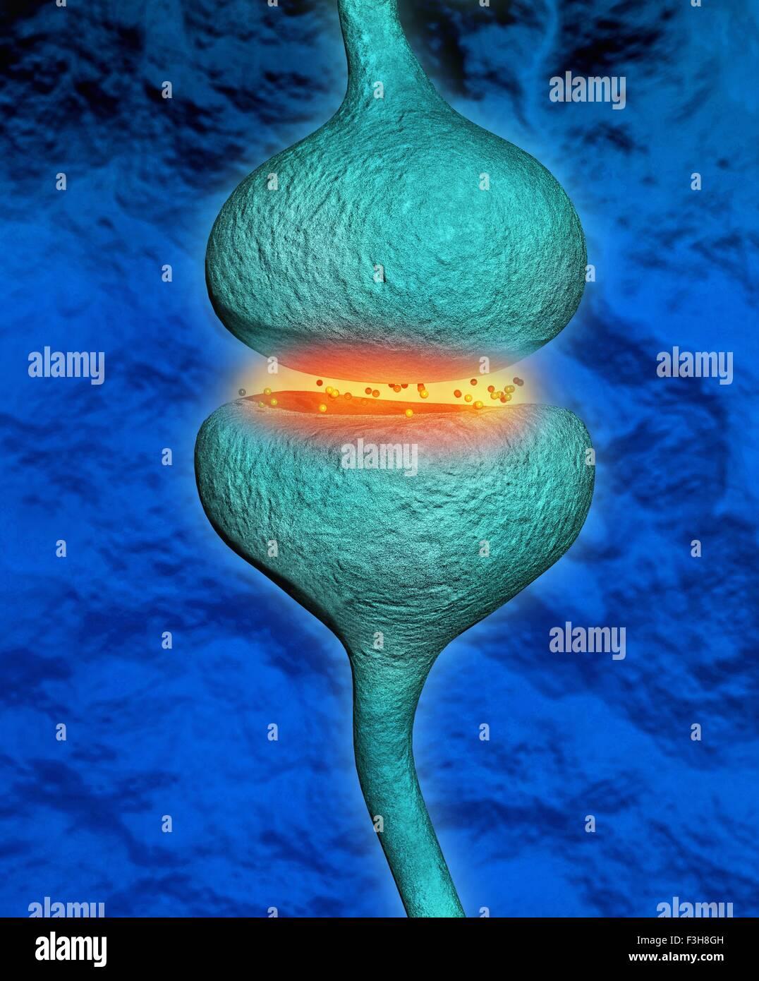 Ilustración 3D de una sinapsis entre dos neuronas Imagen De Stock
