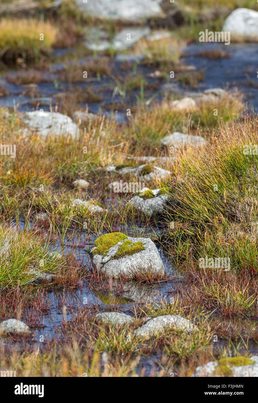 Cubiertas de musgo la roca expuesta en los pantanos en la cumbre de Aonach Mor en las Highlands escocesas. Foto de stock