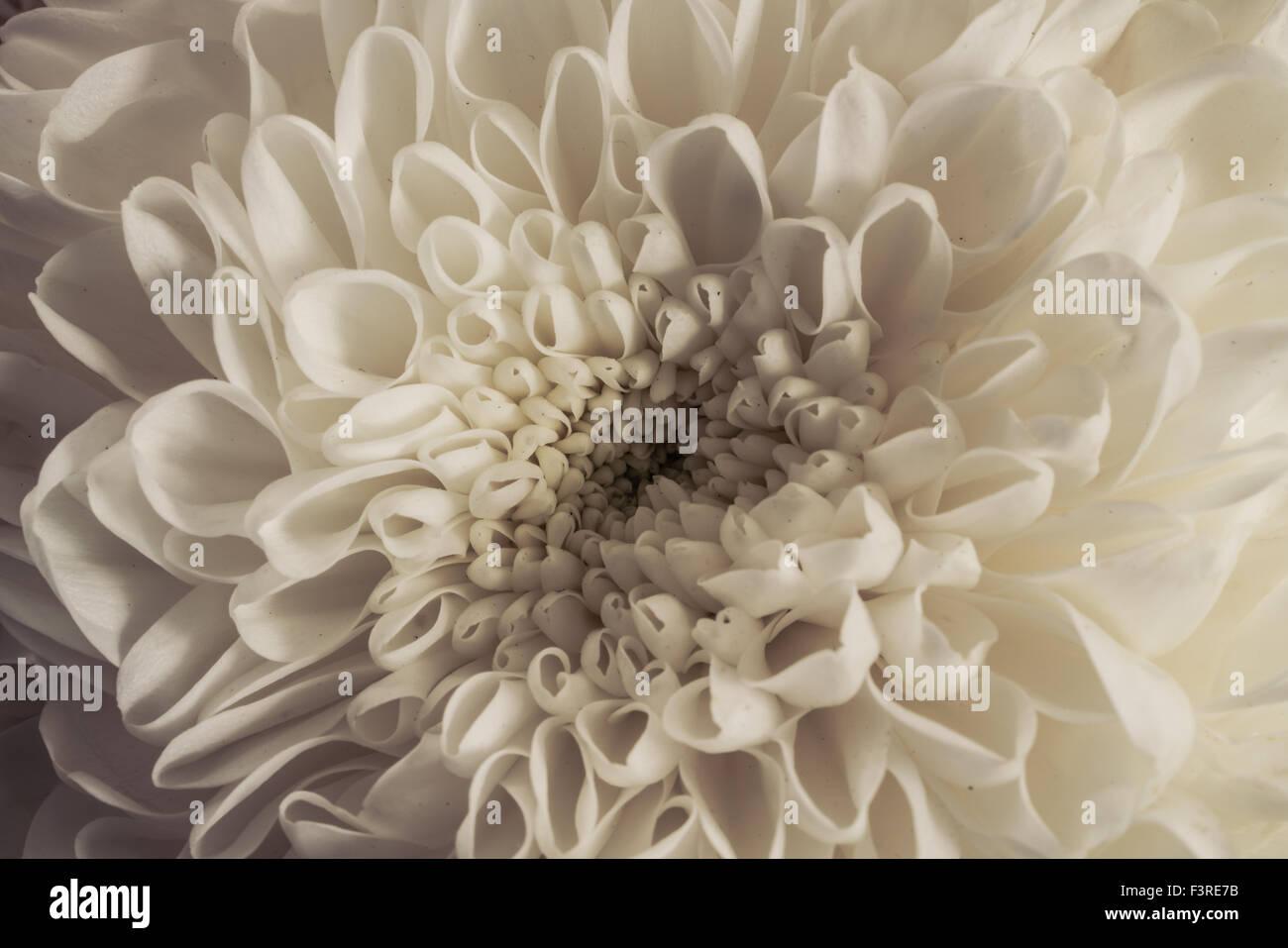 Un primer plano de flores tomadas en otoño. Imagen De Stock