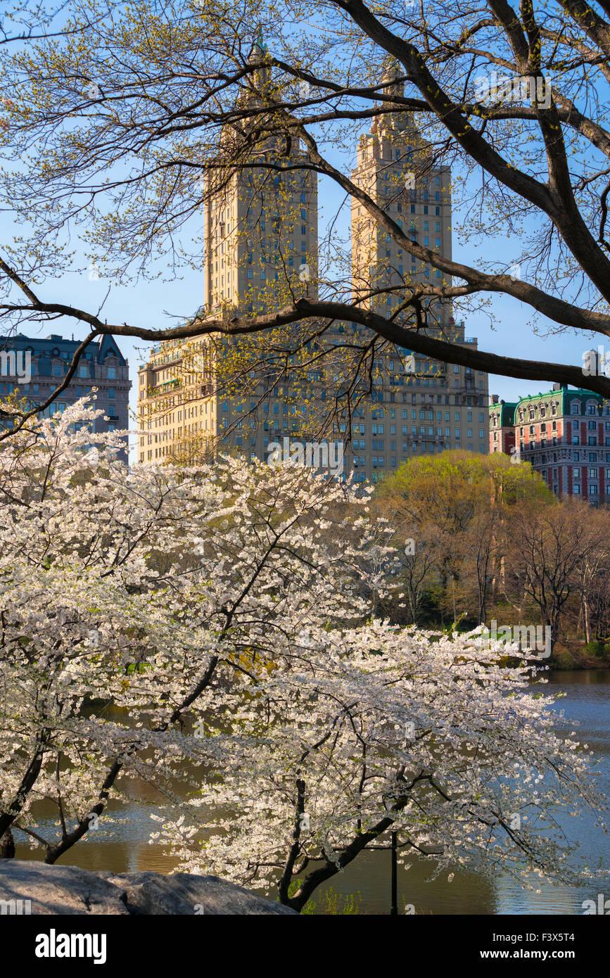 La primavera en Central Park con la floración de los cerezos Yoshino. El Upper West Side de Manhattan, Ciudad Imagen De Stock
