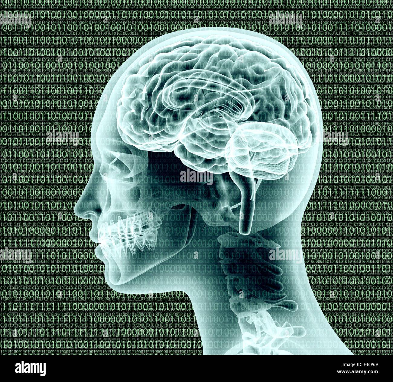 La imagen de rayos x de la cabeza humana con binairy código y un cerebro. Foto de stock