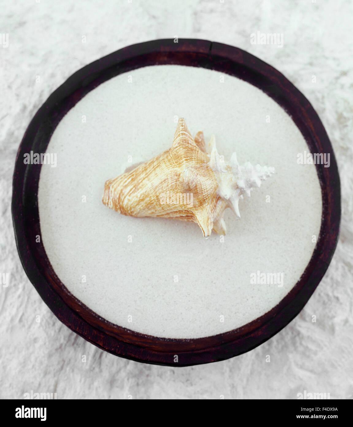 Seashell sobre arena todavía la vida. Maroma Resort and Spa, Riviera Maya, México. Imagen De Stock