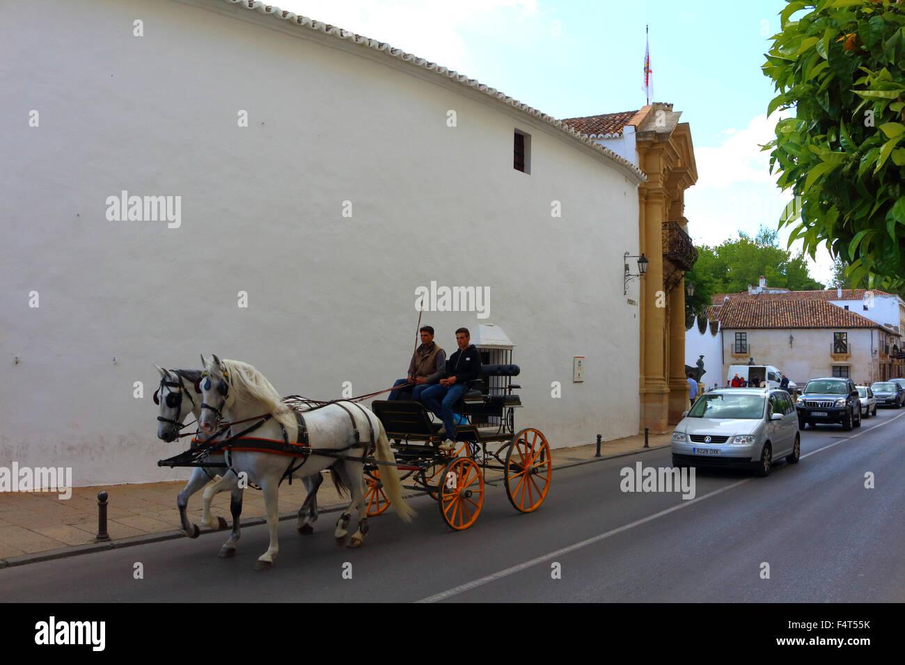 Caballos en frente de la plaza de toros de Ronda. Imagen De Stock